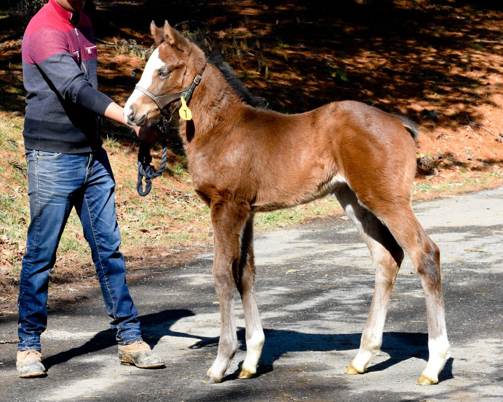 19 Our Fantene filly