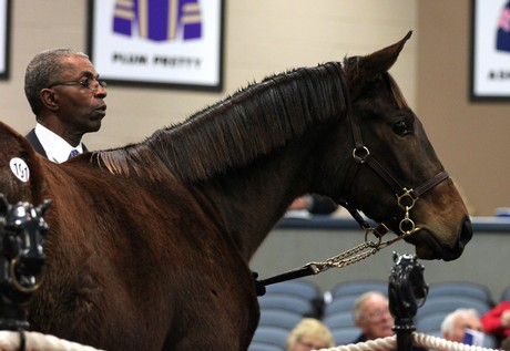 Fifteen Moons' second foal is this filly by Sharp Humor who was sold by a CLF Partnership at Timonium in 2012.