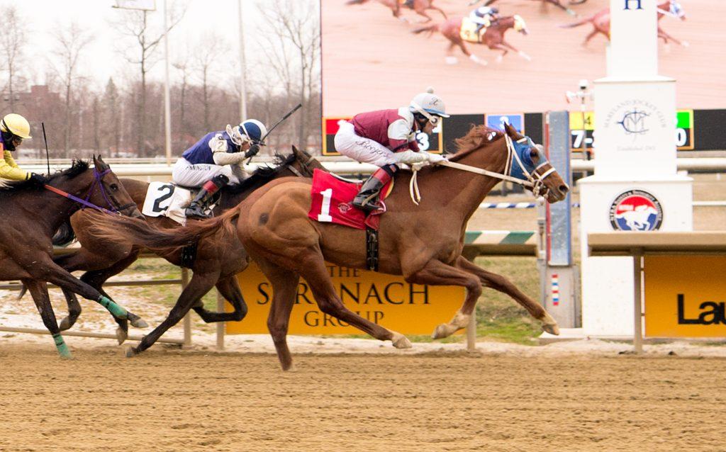 Herman's Gold maiden win