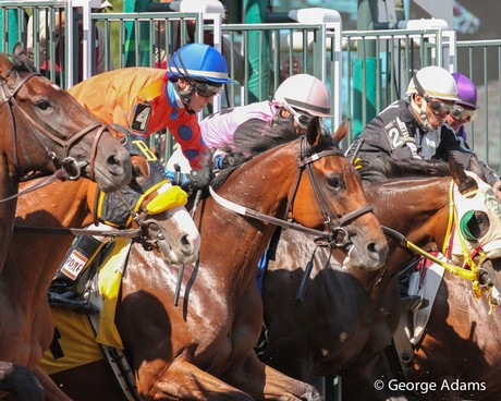 Miss Moonshine breaks from the gate at Parx on June 24, 2014