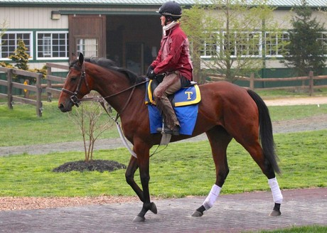 Miss Moonshine heads to the track at Fair Hill on April 24th