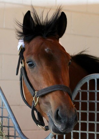 Miss Moonshine enjoys the Florida breeze at Gulfstream Park