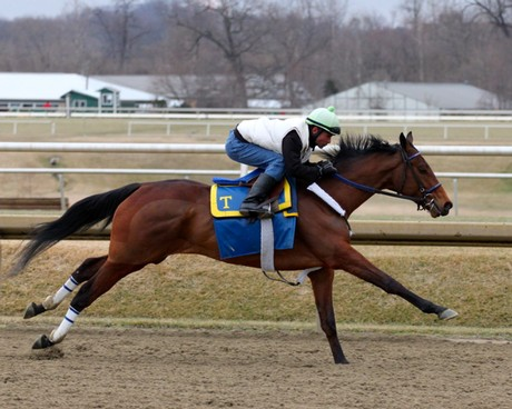 Miss Moonshine breezes at Laurel in March 2014.