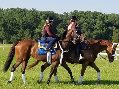 On the turf course at Fair Hill