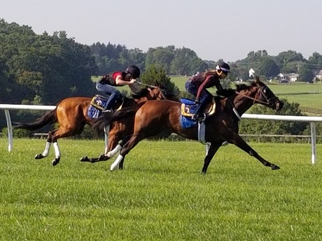 Breezing on the turf at Fair Hill, 8/1/17