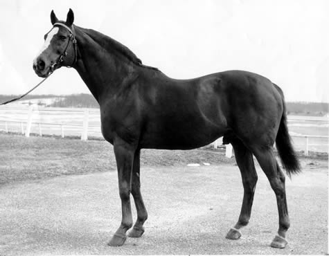 DISCOVERY: Discovery carried the silks of Country Life founder Adolphe Pons as a 2-year-old in 1933 before he was sold to Alfred Vanderbilt, for whom he became a great weight carrier and stallion.