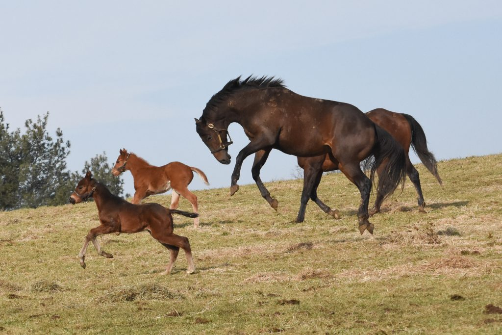Plenty of turnout in large fields allows mares and foals the exercise and grass they need.