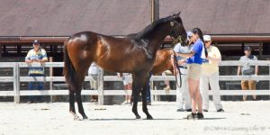2nd-Place MHBA Yearling Show filly MOSLER'S IMAGE.