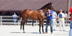 2nd-Place MHBA Yearling Show colt PAWTUCK, by Mosler.