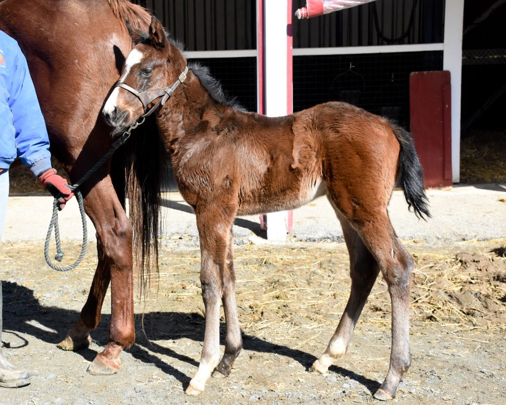 19 Five Star Dream colt