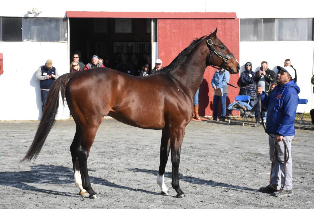 D Rod showing at the 2019 Stallion show.