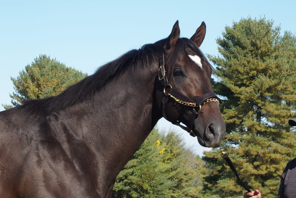 An imposing presence, MOSLER is the best bet for a leading sire in Maryland.