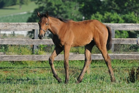 Friesan Fire's first foals include this filly out of U R Key. Named Fire Key, she is a multiple stakes-winner on the turf.