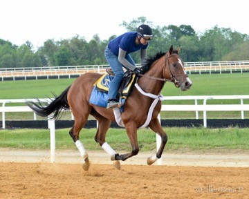 Galloping at Fair Hill