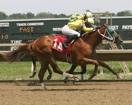 MORNING FIRE became Friesan Fire's first winner at Parx on July 12, 2015! Photo credit EQUI-PHOTO/Bill Denver.