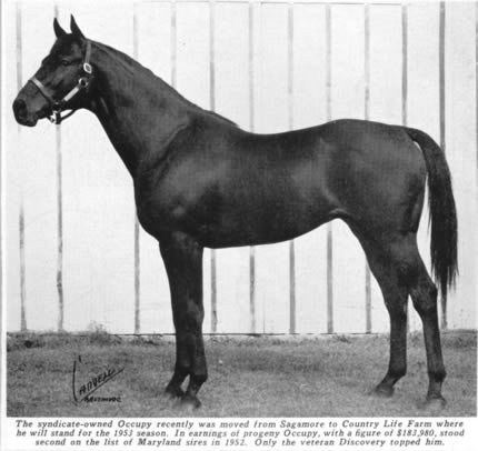 OCCUPY: A winner of the historic Futurity Stakes at Belmont, Occupy spent a portion of his stud career at Country Life.
