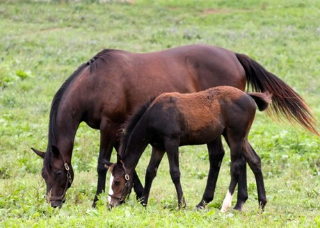 Sagamoon and her '13 colt by Not For Love in July '13