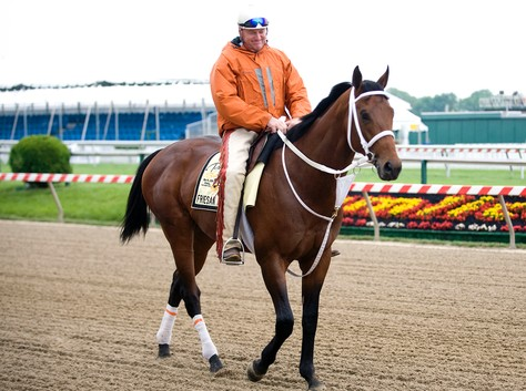 Friesan Fire training for the Preakness
