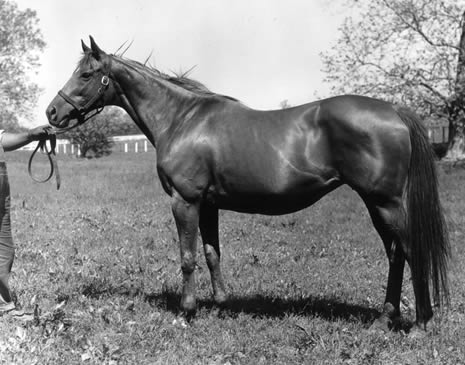 RAISE YOU: Bred by Country Life in 1946, Raise You became the dam of leading sire Raise a Native.