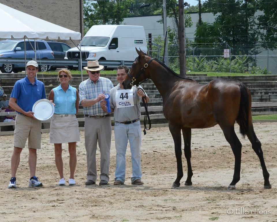 A yearling we prepped for the MHBA Yearling show won her class!