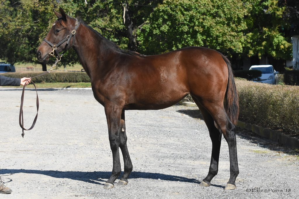 18 As Long As Ittakes filly