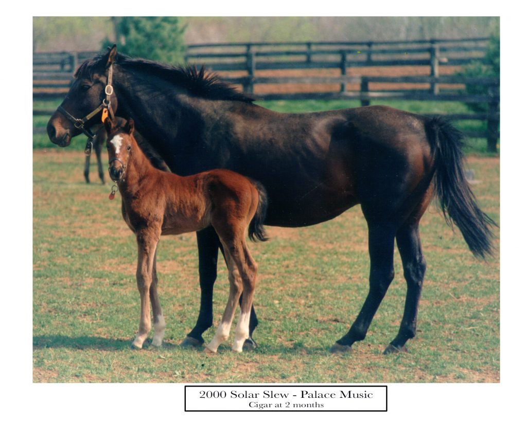 Solar Slew with her 8 day old colt out of Palace Music foaled at Country Life on April 18th 1990 the great Cigar 'ran here first'
