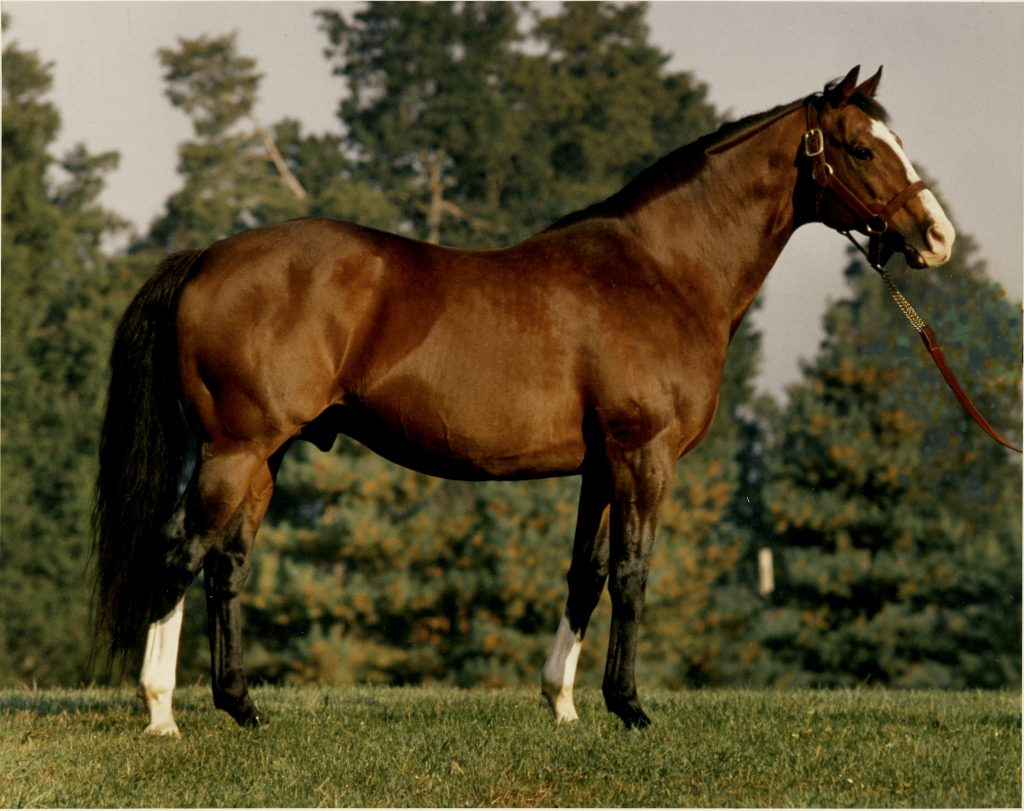 Carnivalay by Northern Dancer out of Obeah. His get included Valay Maid who's record included a win in  the GII Moly Pitcher, 2nd in the Black Eyed-Susan and Third in the Breeders Cup Distaff