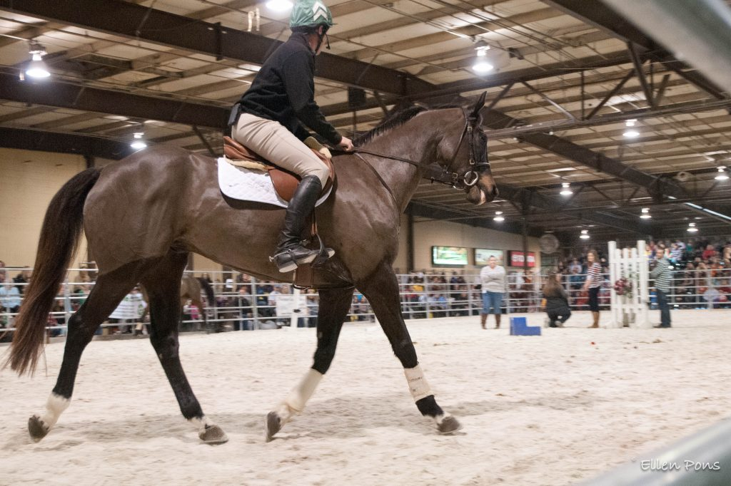 Declan's Moon retired to Country Life and came out of retirement for the first thoroughbred Makeover under saddle here with Stuart Pittman.