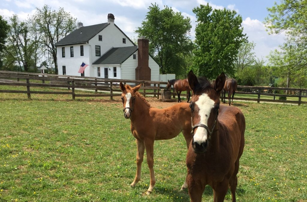 Summer foals will be in sight from the Merrywell driveway.