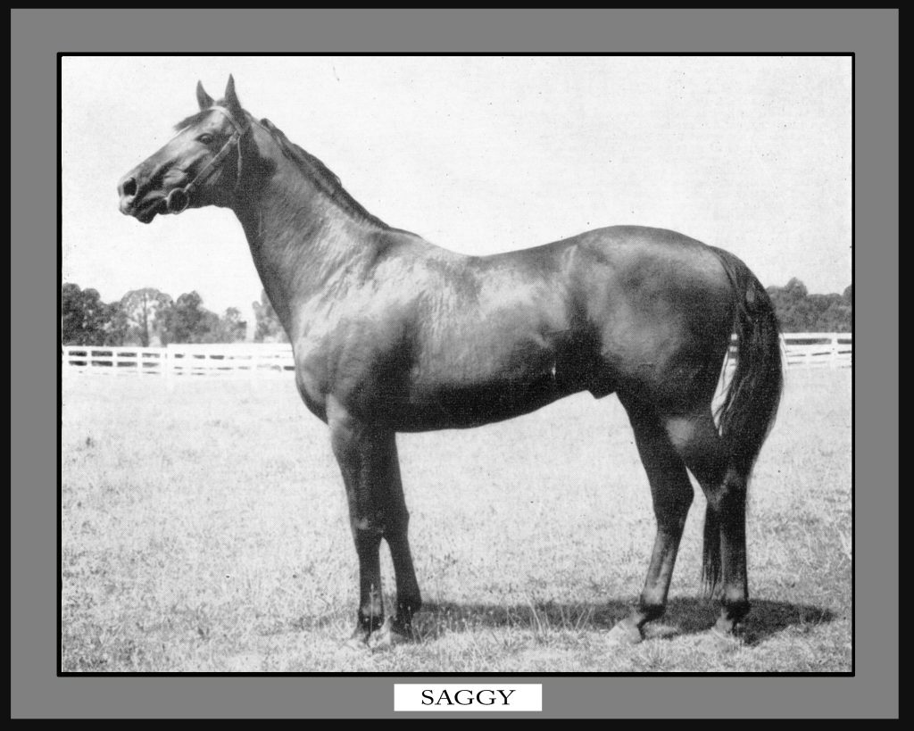 Country Life stallion Saggy: He sired dual classic winner Carry Back,