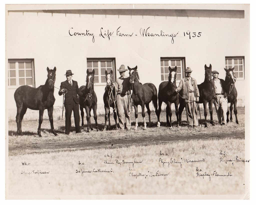 The first crop of weanlings raised at Country Life. The 1935 crop was sold as a lot.